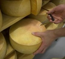 Aux Pays-Bas, des robots apportent le fromage et servent le café | La Russie fait un pas vers une régulation des cryptomonnaies