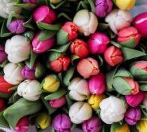 Comment les Québécois ont célébré la Fête des Mères cette année avec la COVID-19 ?