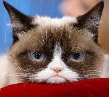 Fil de presse : De nouveaux formats publicitaires pour Google et mort de la célèbre Grumpy Cat