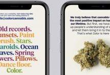 Sid Lee conçoit l'image de marque et les publicités de Color Cannabis