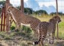 Marelle Communications mandatée par le Parc Safari pour une annonce pas comme les autres