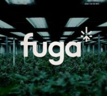 lg2 fait fleurir l'image du Groupe Fuga